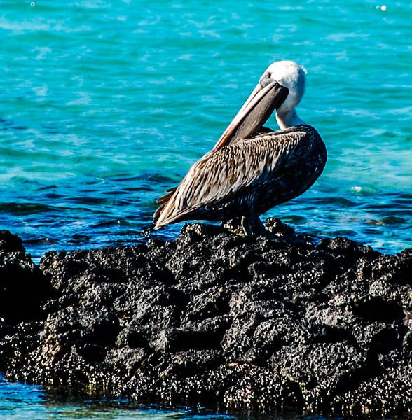 Galapagos-43