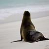 Galapagos06-0133