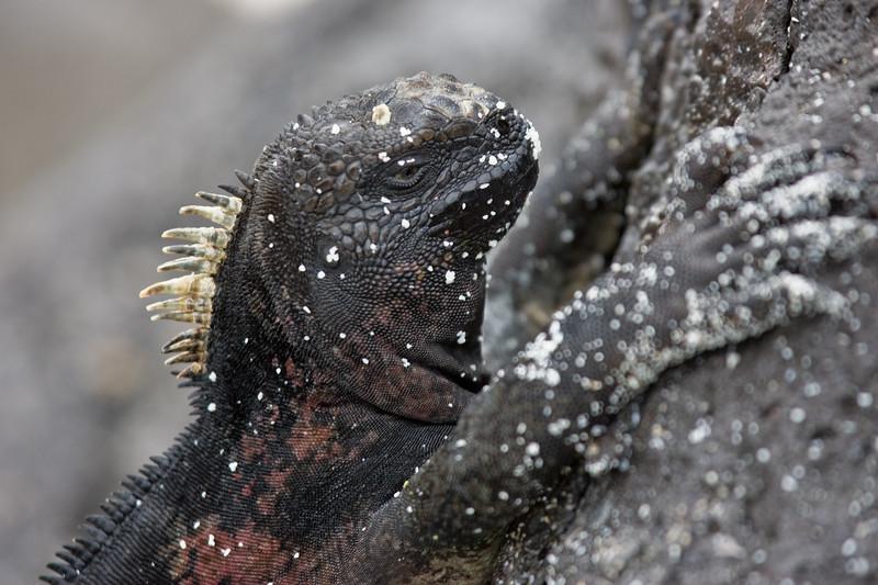 Galapagos06-0220