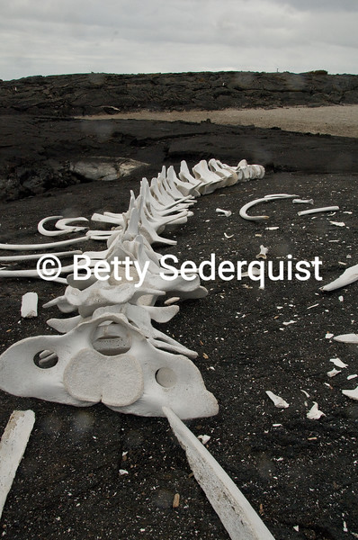 Whale Bones, Fernandina Island, Galapagos