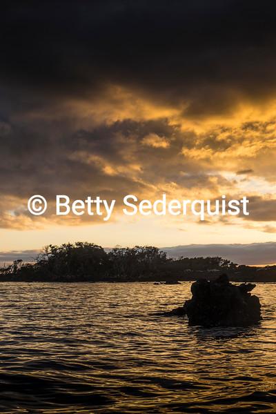 Mangrove Swamps at Sunset, South Fernandina Island