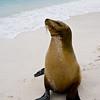 Galapagos06-0199