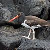 Galapagos06-0628