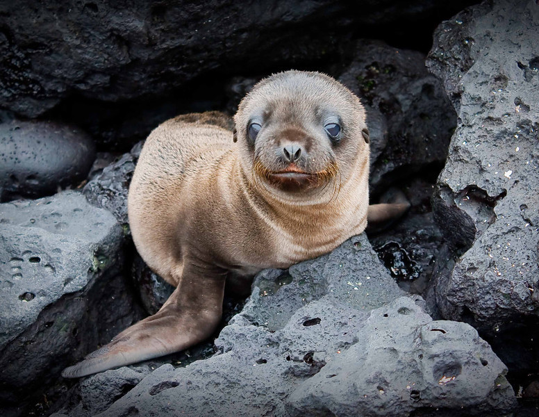 """Blue Eyes Crying in the Rain""<br /> A very young sea lion pup - perhaps one of the most adorable creatures on earth - shares a moment with the photographer to connect."
