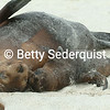 Galapagaos Sea Lion and Baby