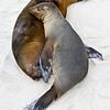 Ecuador. Sea lions sleep on a beach in the Galapagos Islands.