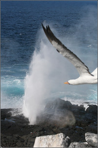 Blow Hole and Albatros