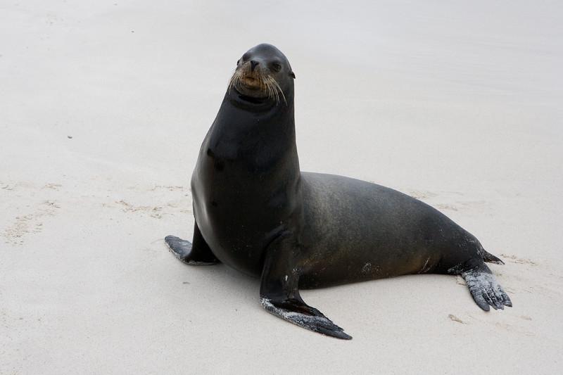 Galapagos06-0148