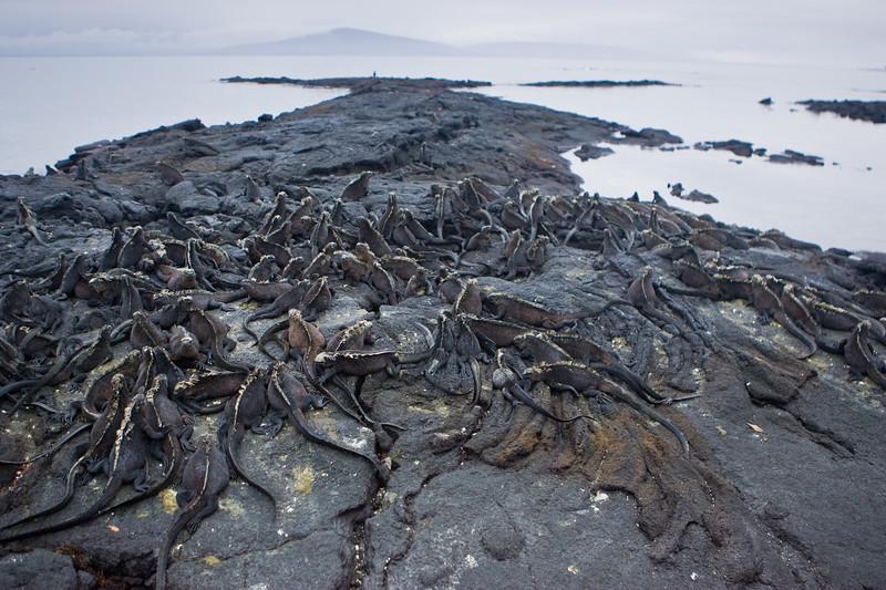 Galapagos06-0757