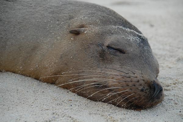 Galapagos Islands 2009