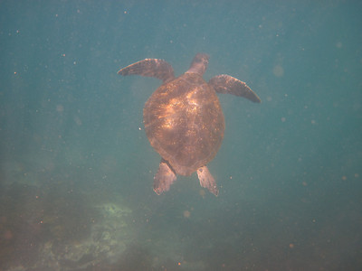 Sea Turle underwater