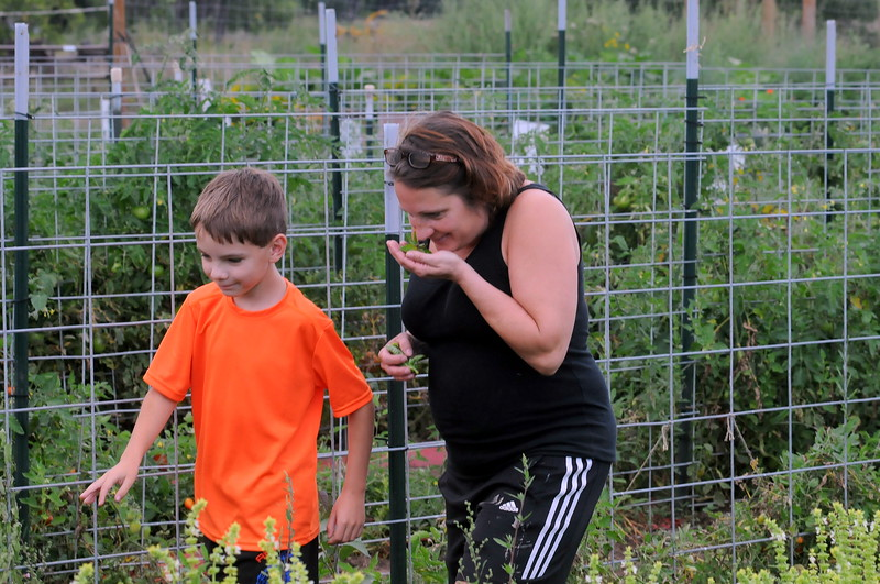 Tracy Lockwood samples the aroma of some basil leaves as she walks among the rows at Glade Road Orchard west of Loveland with her 9-year-old son, Max Fleischer, on Wednesday, Aug. 22, 2018.  (Photo by Craig Young / Loveland Reporter-Herald)
