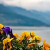Flores no Lago Como