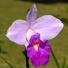 Flor em Teresópolis