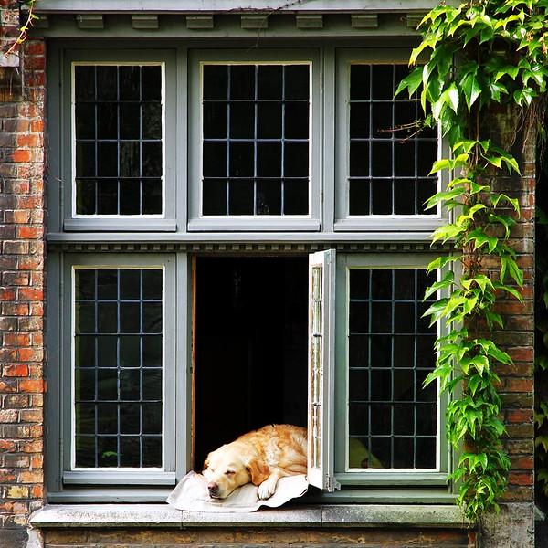 Janela em Bruges