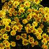 Flores em Teresópolis