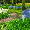 Jardim em Keukenhof