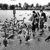 Os Pássaros e as Pessoas