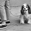O Cachorro e o Humano