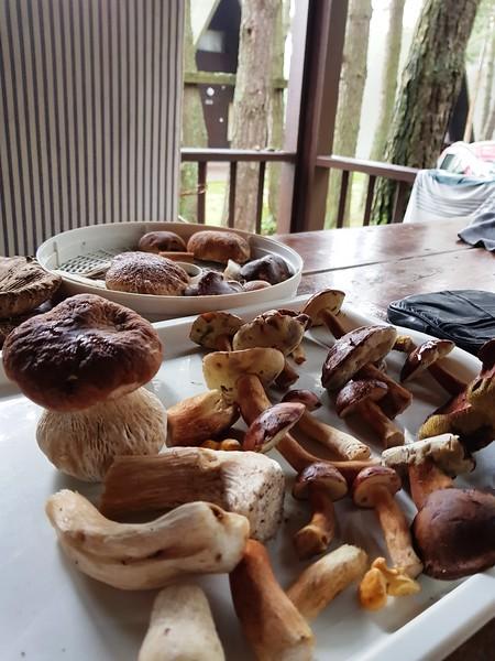 I zbiór z przyosiedlowego lasu