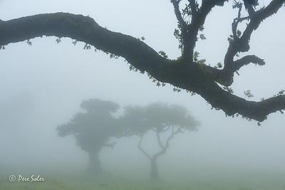 Dialogos en la niebla