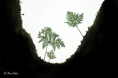 El bosque de miniatura