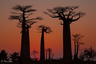 La Família Baobab