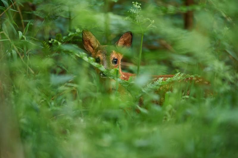 Ein Treffen Bambi