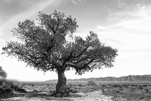 L'arbre 2/2
