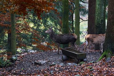 Národní park Bavorský les