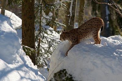 Národní park Bavorský les II