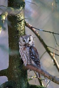 Národní park Bavorský les III