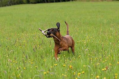 Fotografování psa
