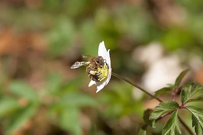 Jarní květiny