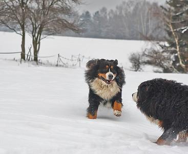 Když se fotí psi