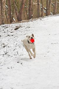 Když se fotí pes