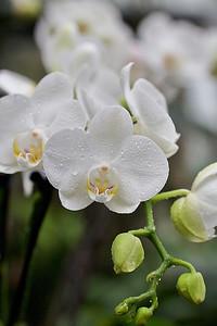 Výstava orchidejí – skleník Fata Morgana