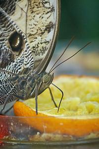 Výstava motýlů ve skleníku Fata Morgana