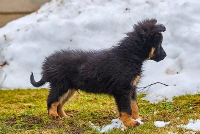 """""""Náš"""" nový pes Ciro"""
