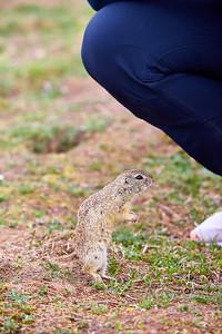 Přírodní rezervace Radouč aneb syslí ráj u Mladé Boleslavi | Nature Preserve Radouč – Ground squirrel paradise near Mladá Boleslav