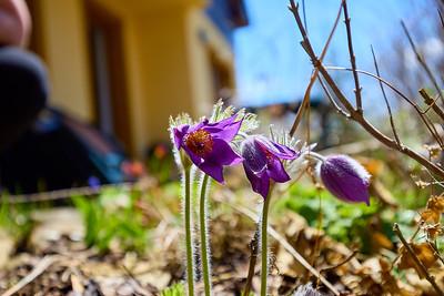 Střípky jara – Lipno nad Vltavou   Snippets of spring – Lipno nad Vltavou