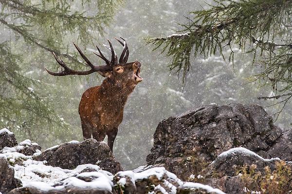 Der König im Schnee