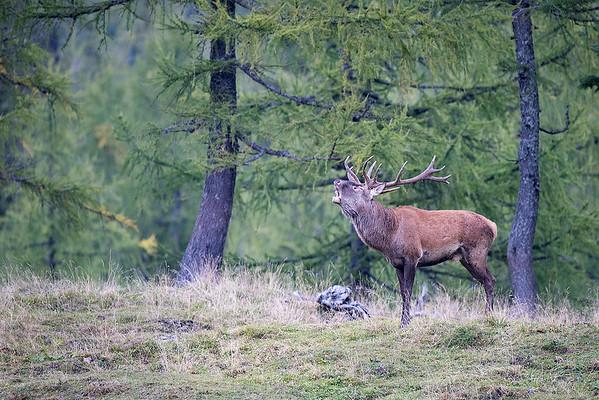 Der Chef im Wald