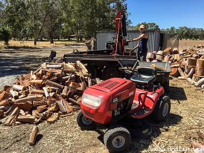 Feuerholz für den nächsten Winter