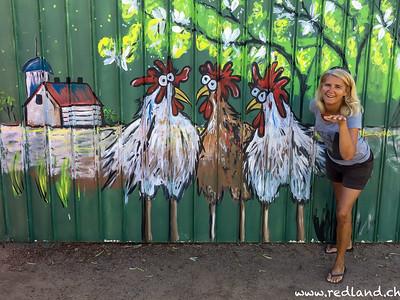 die Hühner sind los