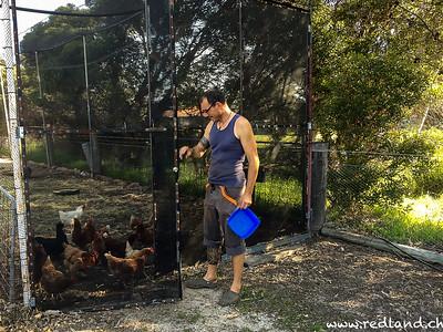 im Hühnerstall ist heut was los