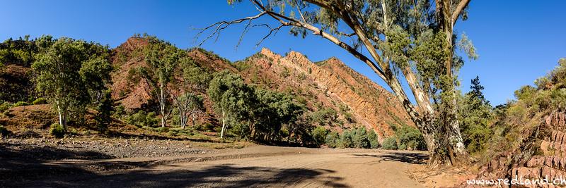 Flinders Range N.P. Brachina George