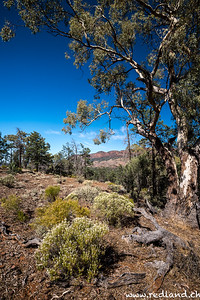 Flinders Range N.P. Heysen Valley