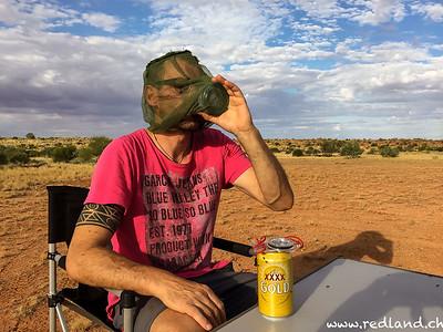 Bier mit Fliegen