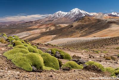 Lauca N.P. Cerro Milagro
